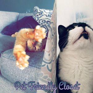 Pet Friendly Closet!